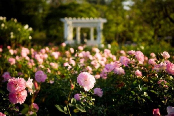Jardim florido em Buenos Aires